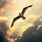 Flight of the Seagull by LisaRoberts