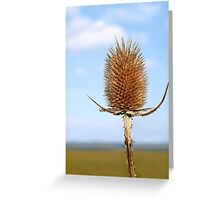 Inflorescence dry teasel Greeting Card