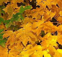 Yellow fall foliage by qiiip