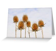 Dry inflorescences of teasel Greeting Card