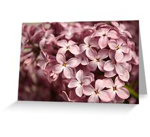Inflorescence of lilac Greeting Card