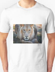 expressive looking male lion T-Shirt