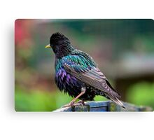 Darling Starling Canvas Print