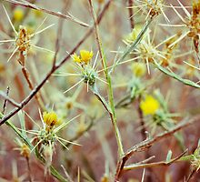 Beauty Among Thorns v.2 by SarahSandoval