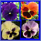 Four Cute Little Pansy Faces Collage by BlueMoonRose