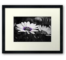 Popping Purple Framed Print