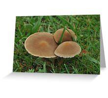 Velvet Pancakes Greeting Card