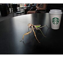 Hay! I'm Trying To Have a Coffee Here! Photographic Print