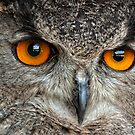 Eurasian Eagle Owl by Bill Maynard