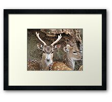 doe and stag Framed Print