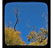 Blue 2 Photographic Print