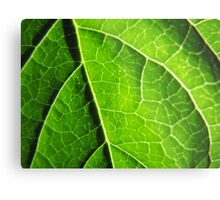 Green leaves produce oxygen Metal Print