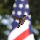 """Patriotic Hummingbird"" by Doyle  McClung"