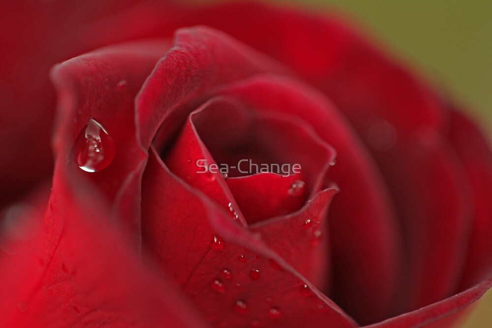 Raindrops on Roses #3 by Sea-Change