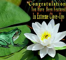 ♥ º ☆.¸¸.•´¯`♥ Sitting on my Lilly Pad Banner ♥ º ☆.¸¸.•´¯`♥ by ╰⊰✿ℒᵒᶹᵉ Bonita✿⊱╮ Lalonde✿⊱╮