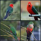 King Parrots by shortshooter-Al