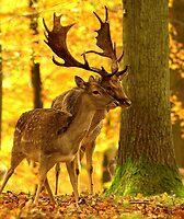 Woodland meeting by Alan Mattison