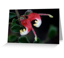 Grevillea alpina Greeting Card