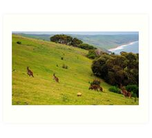Kangaroos with Joeys grazing Art Print