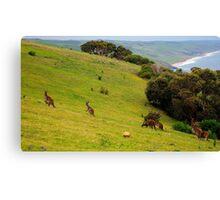 Kangaroos with Joeys grazing Canvas Print