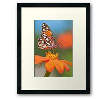 Orange Passion Framed Print