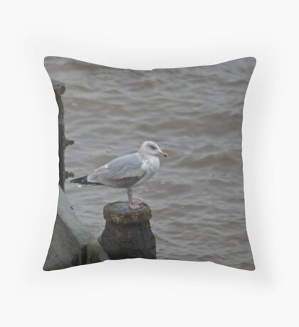 Herring Gull....Third Winter Throw Pillow