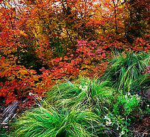 It's My Time ~ Vine Maple ~ by Charles & Patricia   Harkins ~ Picture Oregon