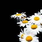 Daisies dof by Sheila Laurens