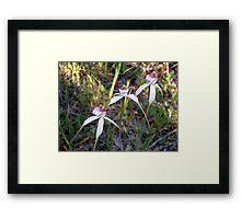 Stark White Framed Print