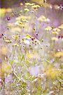 ~ pastel dreams III ~ by Adriana Glackin