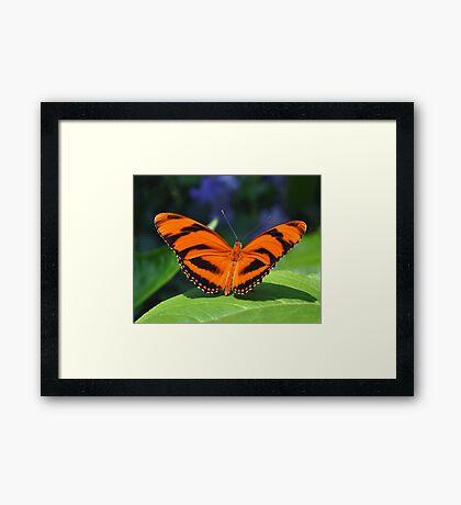 Orange Tiger Framed Print