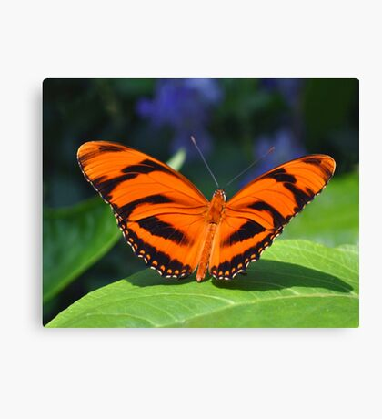 Orange Tiger Canvas Print