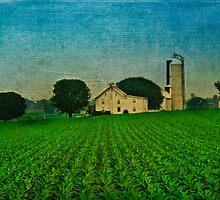 An Amish Farm by DaraD
