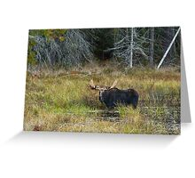 Bull Moose, Algonquin Park Greeting Card