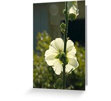 creame,green,flower,summer Greeting Card