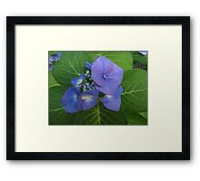 Born to Be Bold Framed Print