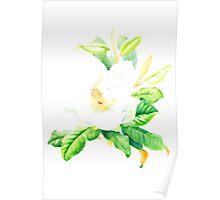 Southern magnolia (Magnolia grandiflorum) Poster