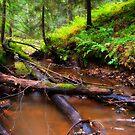 Autumn Forest II by SunDwn