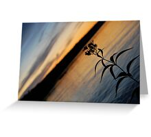 Lonesome Flower - Lunenburg, Nova Scotia Greeting Card