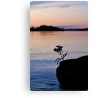 Lonesome Flower 2 - Lunenburg, Nova Scotia Canvas Print