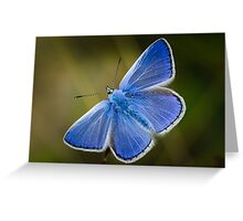 Common Blue Butterfly - Polyommatus icarus Greeting Card