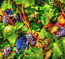 wine vintage vineyard by Rostislav Bouda
