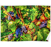 wine vintage vineyard Poster