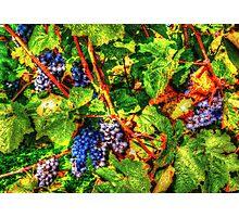 wine vintage vineyard Photographic Print