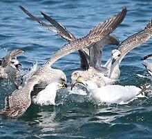 Gulls dinner frenzy by Mary-Lynne Weightman