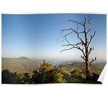 Simien Tree Poster