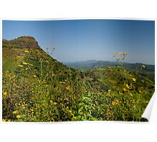 Flowers and Mountains Poster