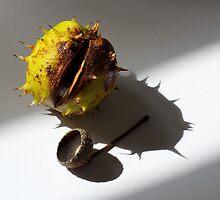 Still life - horse chestnut by Sally Allerton