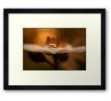 sun dance Framed Print