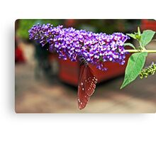 Butterfly Irony Canvas Print